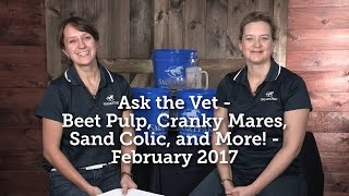 Ask the Vet - Beet Pulp, Cranky Mares, Sand Colic, and More! - February 2017