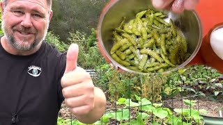 Growing Edamame from Seed to Plate | Backyard Soybeans