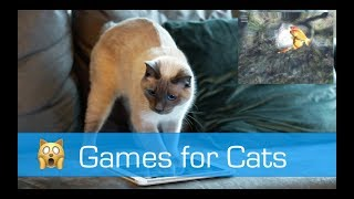 Games for Cats (iPad) - The Man from Amsterdam w/ Neptunus