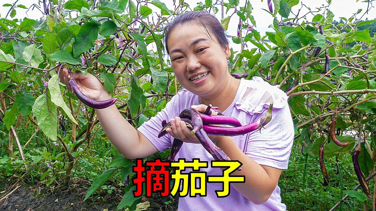 菜園摘茄子,媳婦做紅燒茄子,舅公誇獎好吃   Do braised eggplant, uncle praised delicious