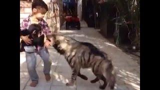 حيوان مفترس يهاجم طفل في حديقة والطفل يقوله وخر عني