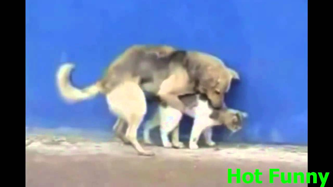 Dog Videos Compilation