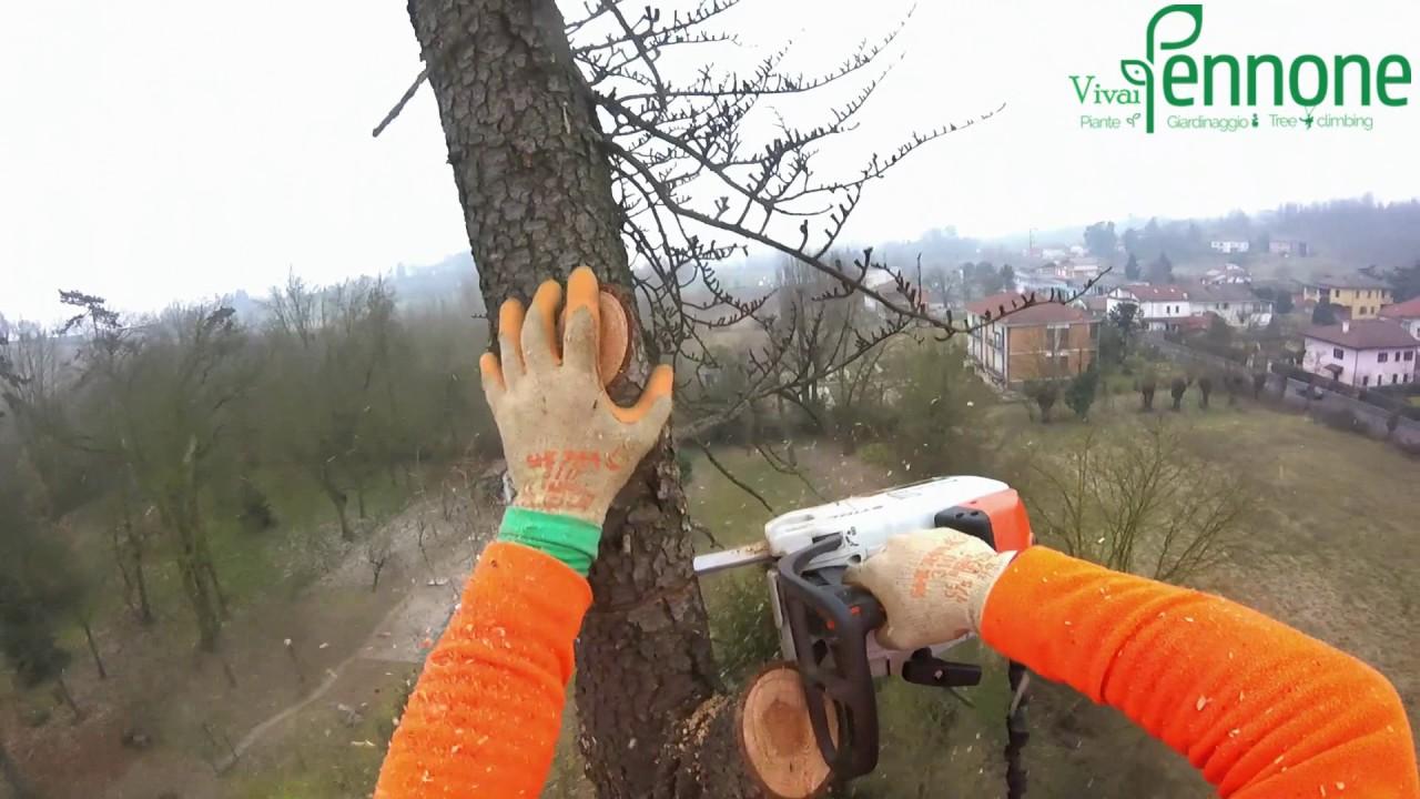 tree climbing alessandria