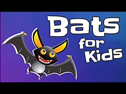 Bats for Kids | Animal Learning Video