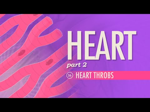 The Heart, part 2 – Heart Throbs: Crash Course A&P #26