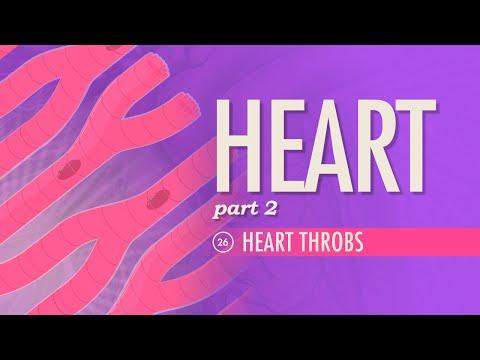 The Heart, Part 2 - Heart Throbs: Crash Course A&P #26