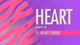 The Heart, part 2 - Heart Throbs: Crash Course A&P #26