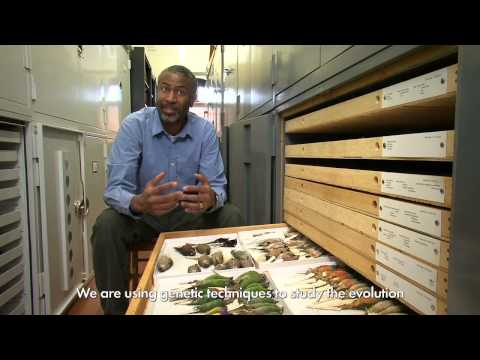 Ornithology and Evolution at Harvard on YouTube