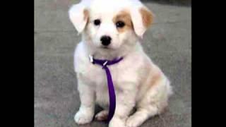I Wanna Fuck A Dog In The Ass - Blink-182