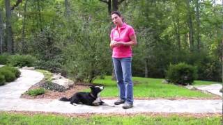 Dog Training- Luring Method