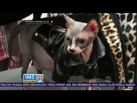 2 Kucing Termahal Hadir di Ajang Propaganda Cat Show Palembang