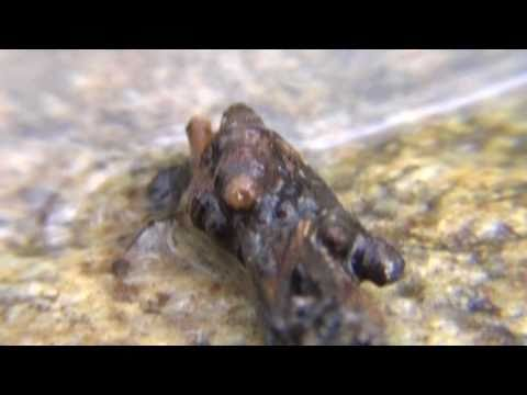 The Architect (Caddisfly Larva)