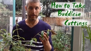 How to Take Buddleia Cuttings