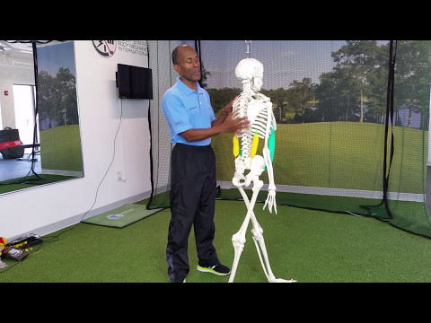 Golf Lower Back Pain Must See Exercises and Stretches