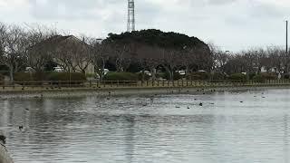 千葉県旭市 袋公園 低い雲に覆われて、雨が降り出しそうな空です。 ipho...