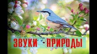 Звуки природы ☸ Сверчки, лягушки и пение птиц, для глубокого сна