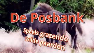 Paarden van de Posbank