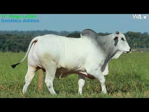 LOTE 26 - REM 10408 - 17º Mega Leilão Genética Aditiva 2020