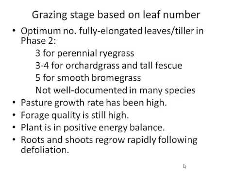 The Importance of Grass Morphology in Grazing Management