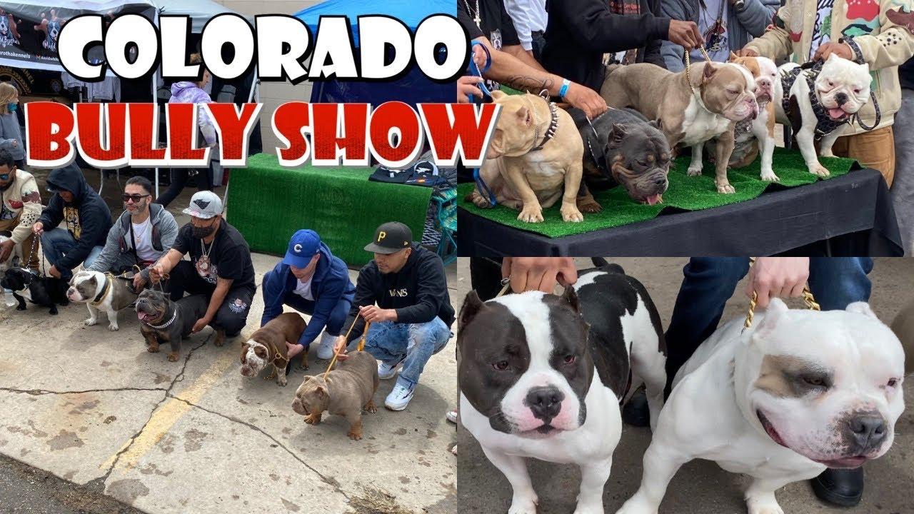 Colorado AMERICAN BULLY'S (La Bodega Fun show 2021)
