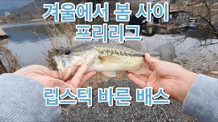 겨울과 봄사이 프리리그 쉐드 웜  배스낚시 립스틱 바르고 나오 배스