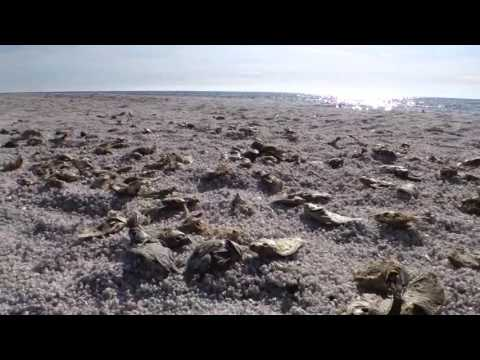 Salton Sea - Beach of Bones