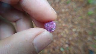 Đào núi tìm kim cương hồng