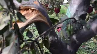 #lahauldisaster2018 | Damage Footage (unedited)  - LAHAUL DISASTER 2018 | Lets Grow Apple