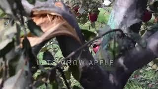 #lahauldisaster2018 | Damage Footage (unedited)  - LAHAUL DISASTER 2018 | Lets Grow Apple