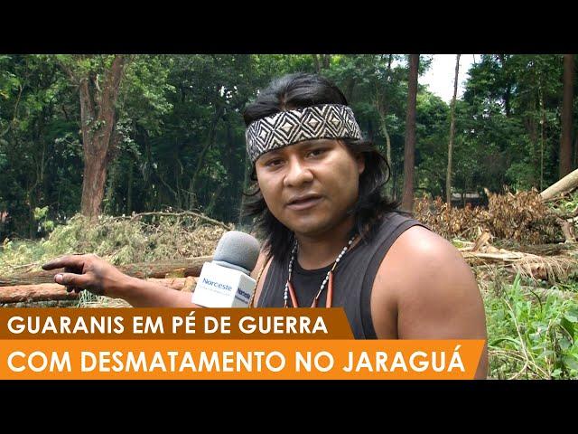 Guaranis em pé de guerra com desmatamento no jaraguá