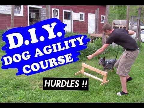 BUILT OUR OWN DOG AGILITY COURSE !! AUSTRALIAN CATTLE DOG
