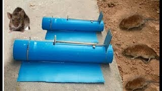 Best PVC Mouse / Rat Trap In Action - How To Make PVC Rat Trap / Water bottle Mouse/Rat Trap