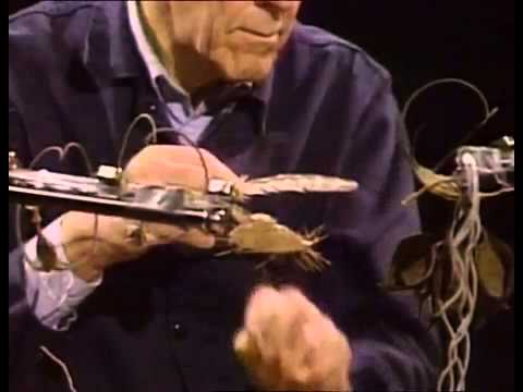 John Cage playing amplified cacti and plant materials with a feather   YouTube