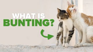 Cat Bunting Explained By Vet | Ultimate Pet Nutrition