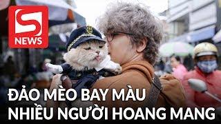 Đảo Mèo - Hội nhóm cho người yêu mèo