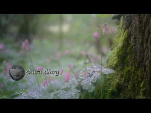 অসাধারণ একটা ভালোবাসার গল্প | Bengali Heart Touching Audio Story - charu diary