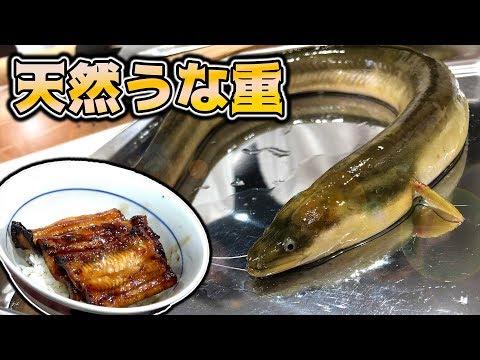 【希少】釣った天然うなぎで特製うな重を作る!!