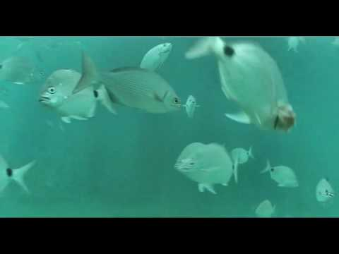 ???? Deerfield Beach FL Underwater Cam 5-21-16