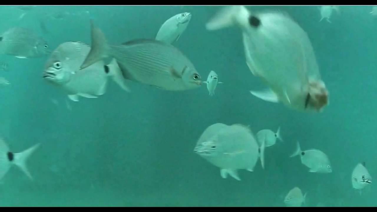 Deerfield Beach Fl Underwater Cam 5 21 16
