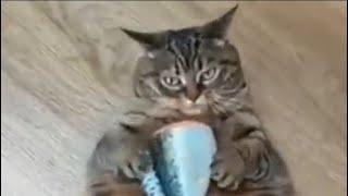 Приколы с кошками и котами Прикольное видео про котов Смотреть ВСЕМ Ну очень смешно
