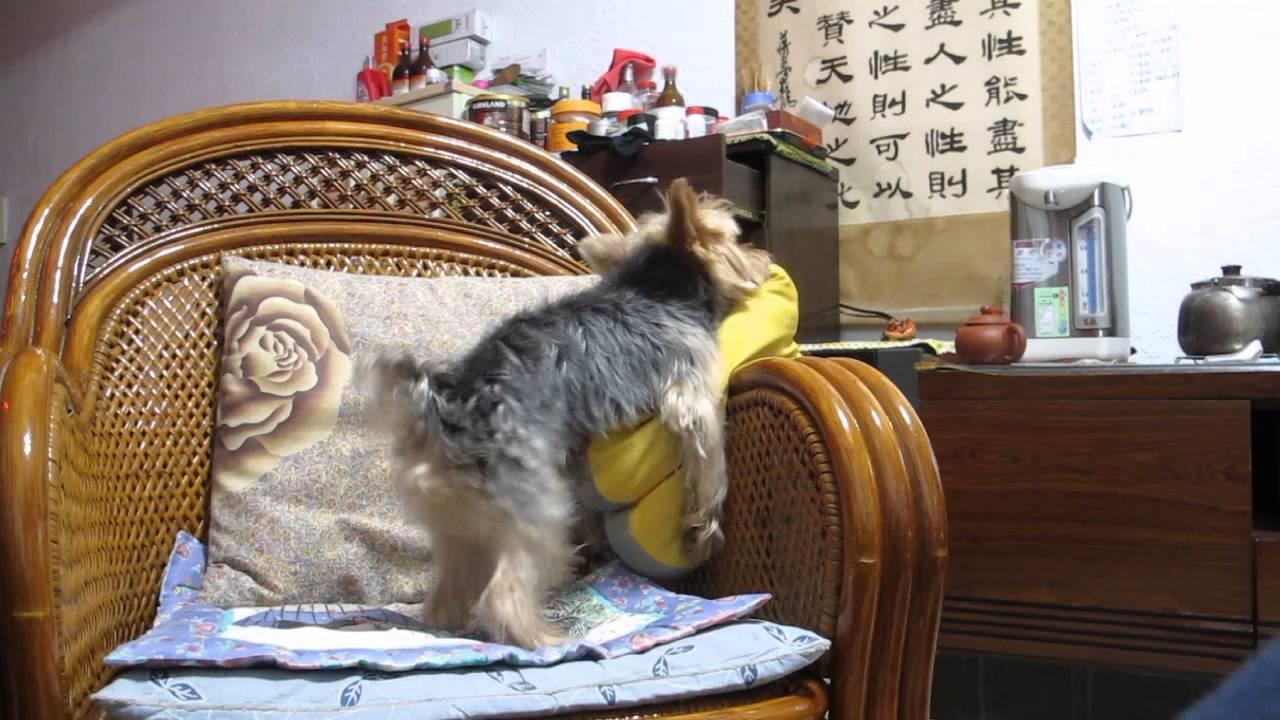 亞洲空幹狗 - YouTube