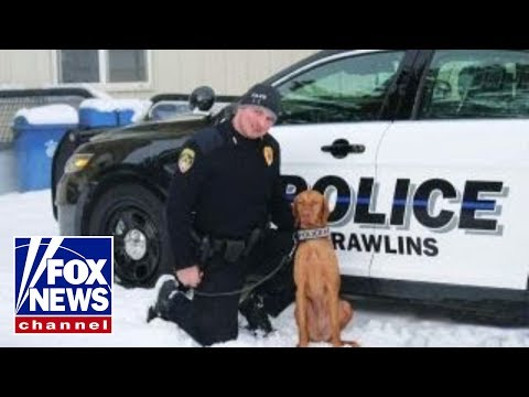 Meet Bella of the Rawlins, Wyoming Police Department