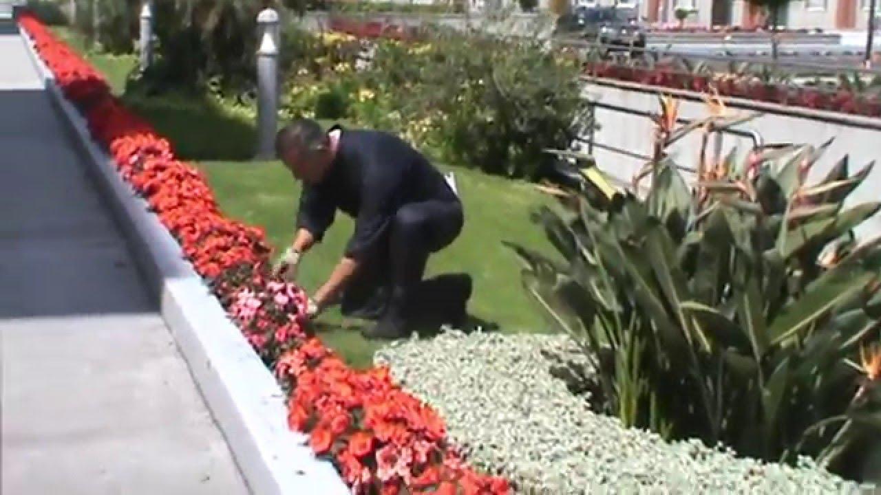 An lisis puesto trabajo jardinero youtube for Trabajo jardinero