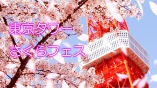 東京タワーでは、3月より「東京タワーさくらフェス」をスタート。 展望...