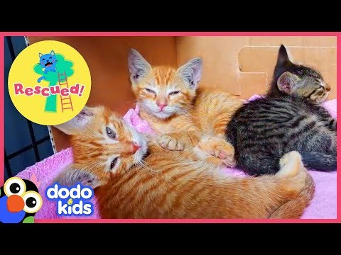 Little Orange Kittens Ask A Nice Man To Rescue Them | Animal Videos For Kids | Dodo Kids