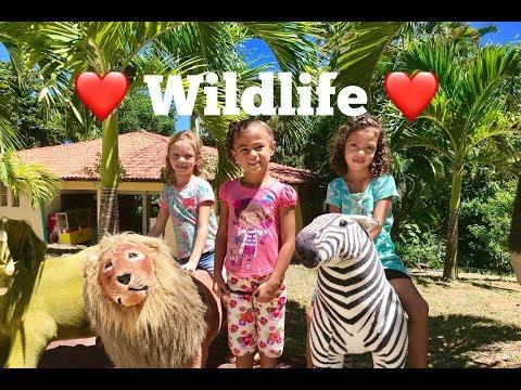 Zoo Wildlife in Brazil