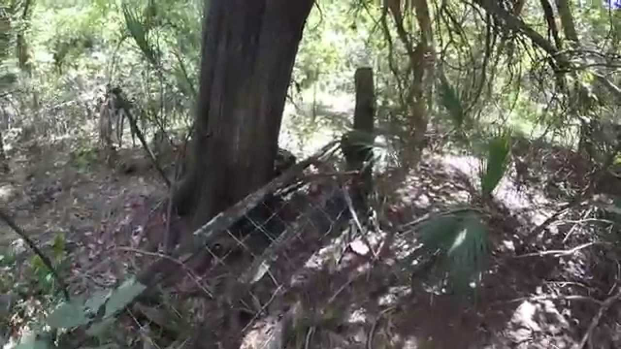 exploring in the green swamp possible homestead site   youtube