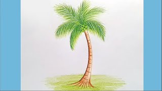 How to draw Coconut tree step by step