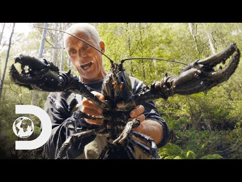 🔴 Jeremy Wade Finds Giant Crayfish   Jeremy Wade's Dark Waters
