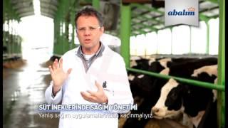 Abalıoğlu - Süt ineklerinde sağim yöntemi